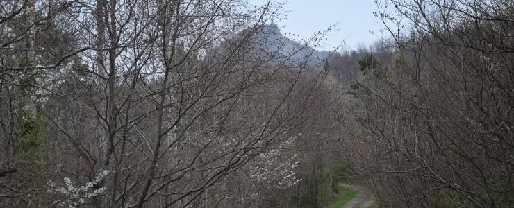 Propriété agricole et forestière dans le Puy-de-Dôme