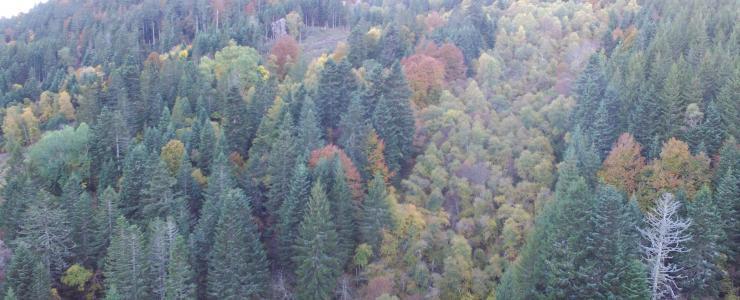 Propriété agricole et forestière dans le centre de la France