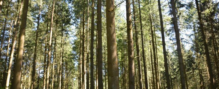 Floresta de produção na Borgonha-Franco Condado