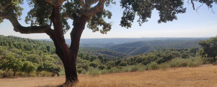 Pourquoi investir dans la forêt portugaise?