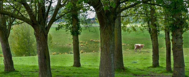 La forêt Haut-Normande