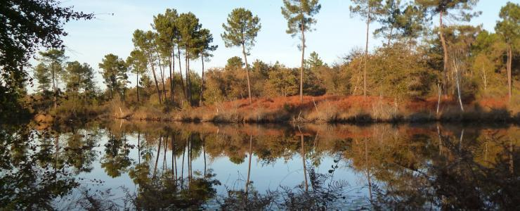 Propriété forestière de loisirs en Dordogne
