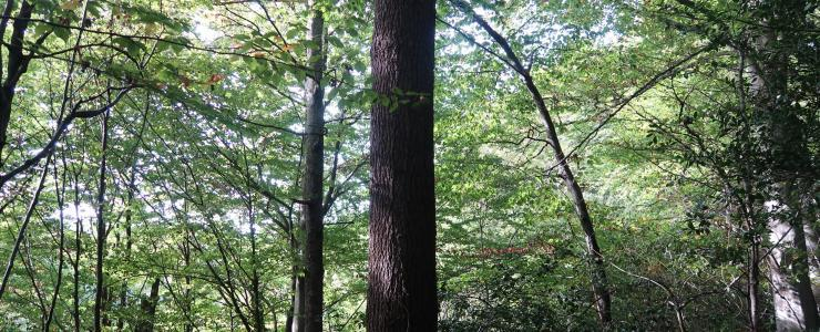 Forêt de production Feuillue dans les Pyrénées Atlantiques