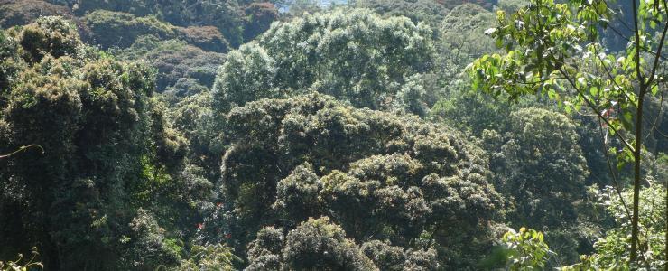 La forêt : l'antichambre du monde sauvage