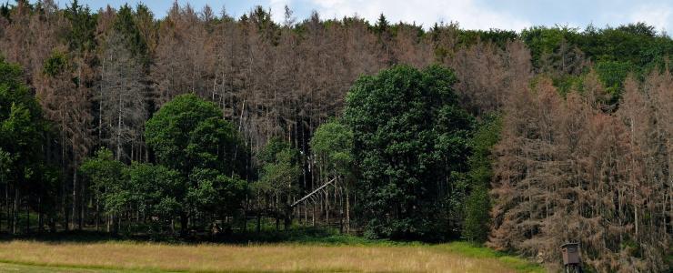Comment adapter la forêt au changement climatique ?  Recommandations