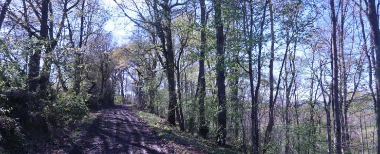 Forêt d'avenir sur Toulouse