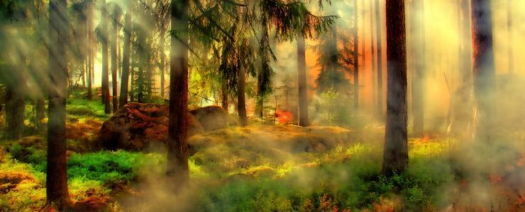 Sylvassur, Une assurance dédiée aux forestiers privés de France