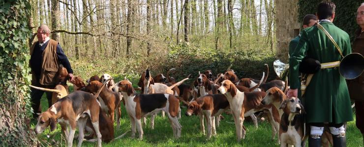 Forêt Investissement watches the start of a hunt with hounds in the Tronçais forest