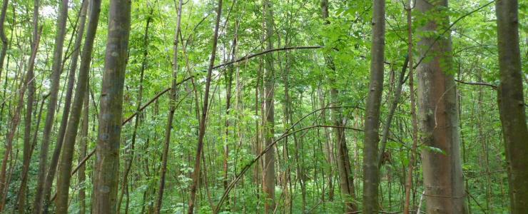La sylviculture irrégulière, une gestion forestière écologique
