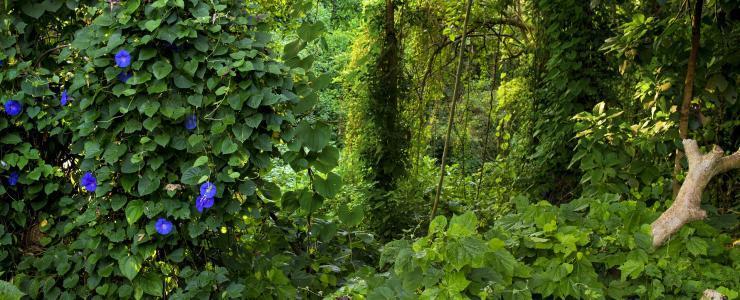 Les filières tropicales à l'épreuve de la lutte contre  la « déforestation importée »
