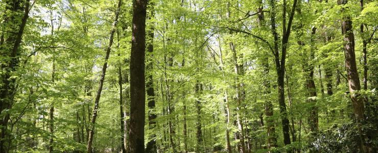 Propriété forestière, étangs, haras en Normandie