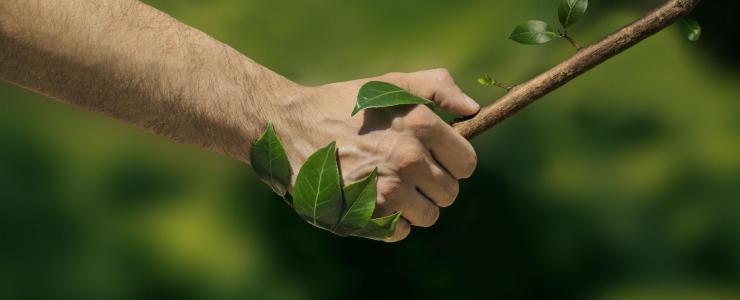 Pourquoi assurer sa Forêt ?