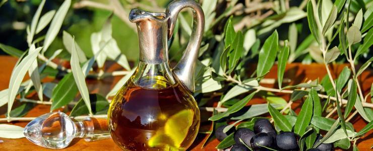 La culture de l'olivier : entre tradition millénaire et modernité