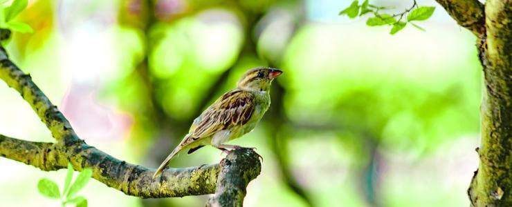 Les oiseaux ne peuvent plus se cacher pour mourir !