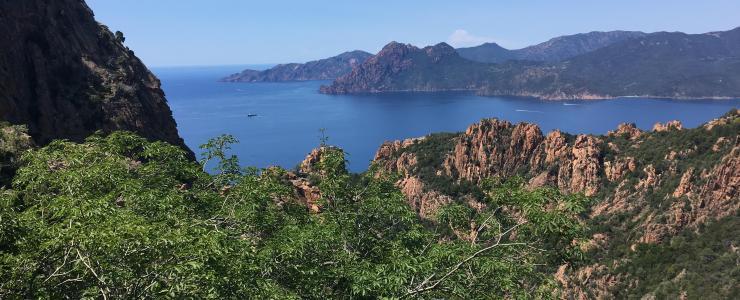Comment acheter ou vendre une forêt en Corse ?