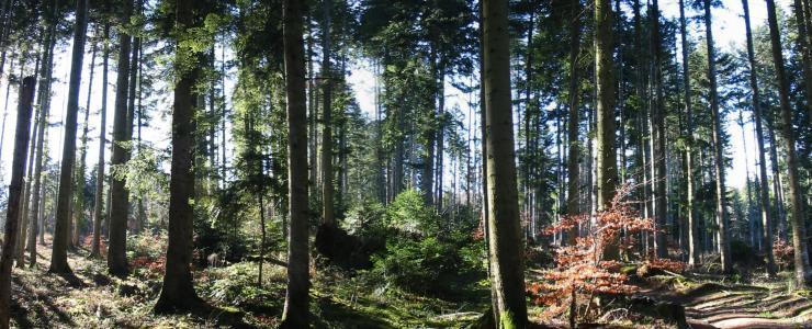 Les méthodes d'inventaire forestier