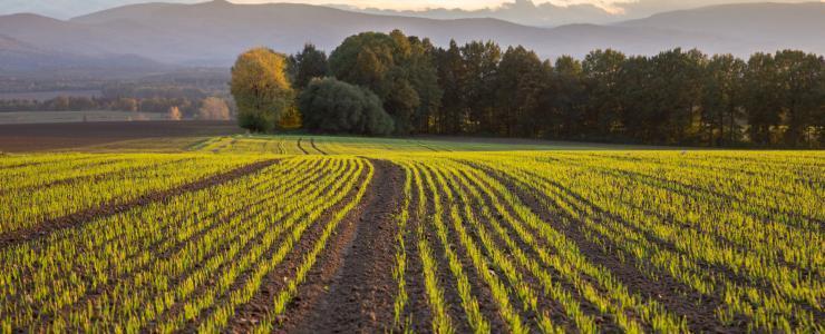 Approche économique de l'Agroforesterie
