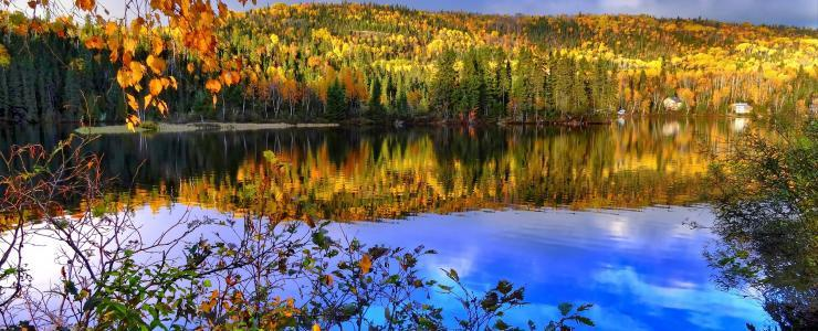 The Great Lakes–St. Lawrence forest; highly valued woodlands