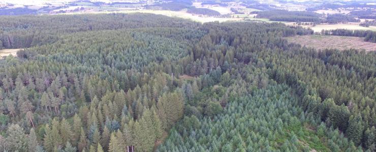 Floresta de produção em Lozère