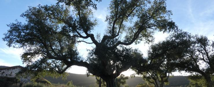 Propriedade florestal no Alto Alentejo