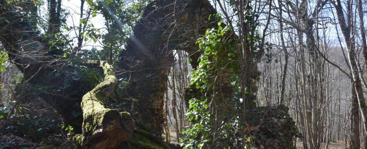 Propriété forestière en Dordogne