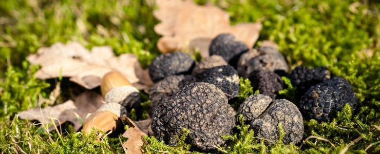 Truffière et Parcelle boisée