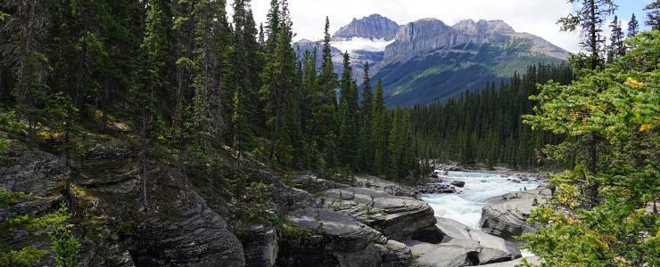 Le Canada, pays forestier de choix