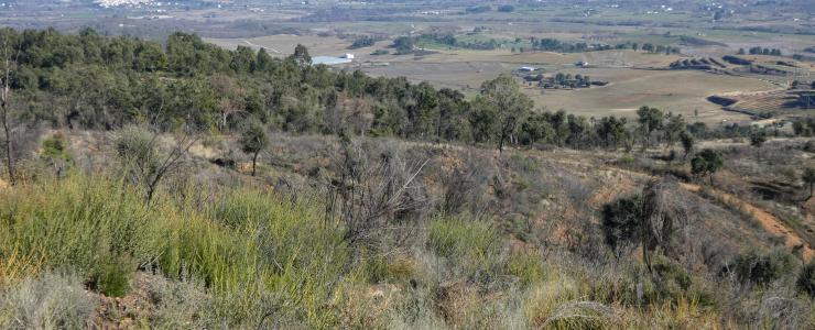 Propriedade Florestal na Região Centro de Portugal