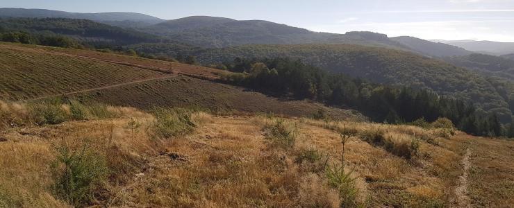 SUD ABIES externalise sa gestion forestière
