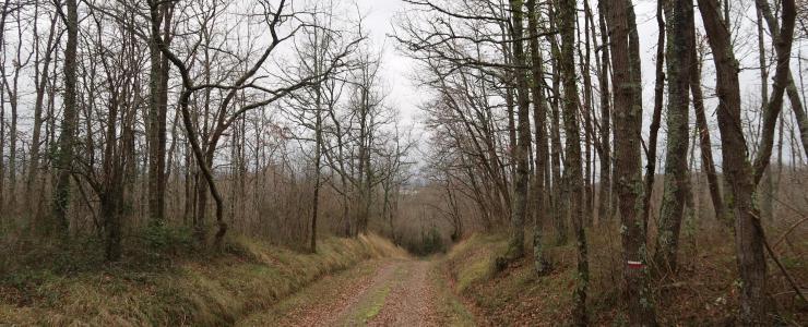 Forêt de production et de loisirs proche de Tarbes