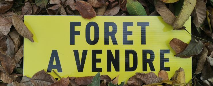 Vendre sa forêt chez Forêt Investissement