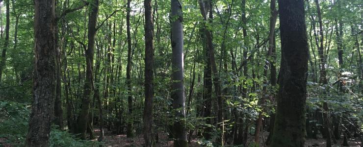 Parcelle de bois à vendre en un seul tenant