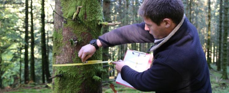 La vente d'une forêt