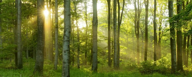 Acheter un bois ou une forêt : Une affaire de spécialiste