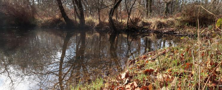 Forêt de chasse dans le département de l'Aisne avec plan d'eau