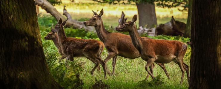La Sologne, région naturelle et forestière mais aussi territoire de chasse