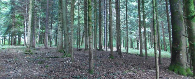 Domaine Forestier dans la Meuse