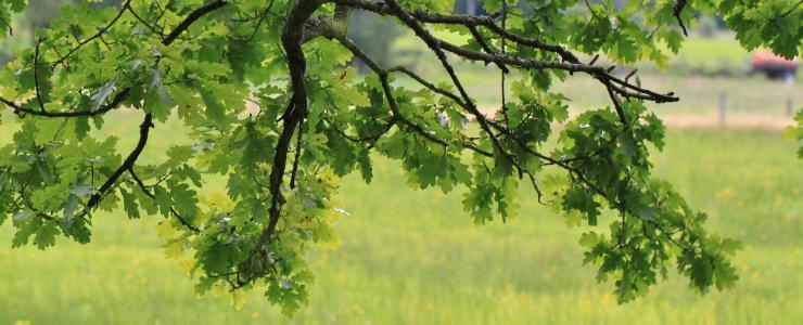 90 Territoire de Belfort - Un taux de boisement en constante progression