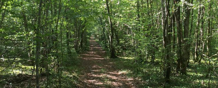 Forêt de production de 48 ha dans le département de l'Yonne